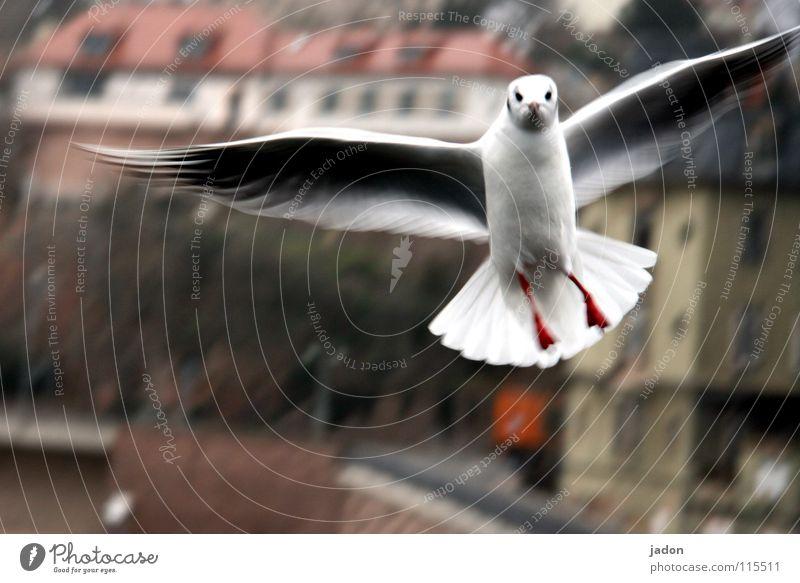Was guggsd Du? Stadt Tier kalt Luft Vogel fliegen Luftverkehr stehen Flügel Möwe Frustration Angriff attackieren