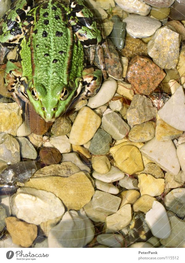 green monster Natur Wasser grün ruhig Tier Farbe kalt springen Garten Stein See Küste klein nass Elektrizität Klarheit