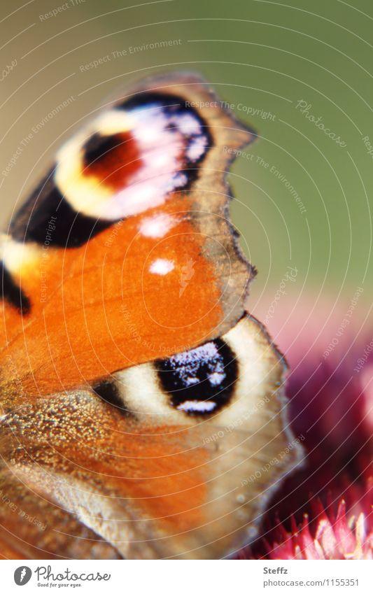 style your wings IX Umwelt Natur Sommer Schönes Wetter Deutschland Schmetterling Flügel Augenfalter Edelfalter natürlich schön mehrfarbig orange Romantik