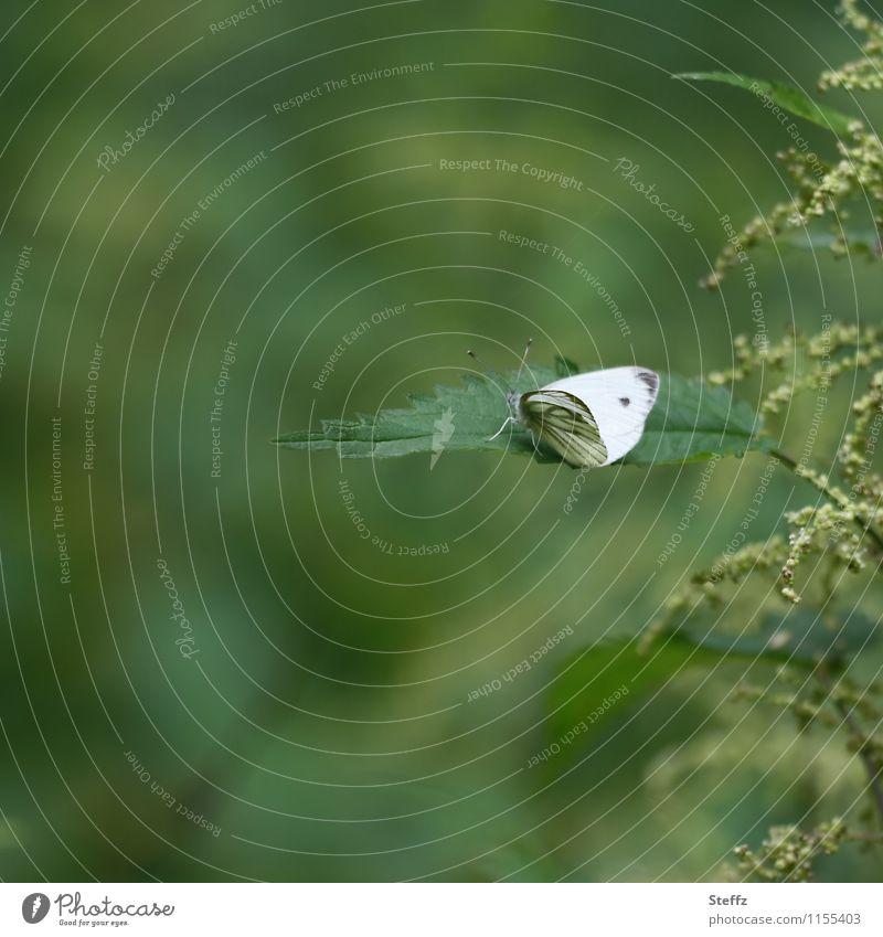 schwerelos Natur Pflanze schön grün Sommer weiß Einsamkeit Blatt ruhig Wald natürlich Textfreiraum Flügel Pause Schmetterling Leichtigkeit