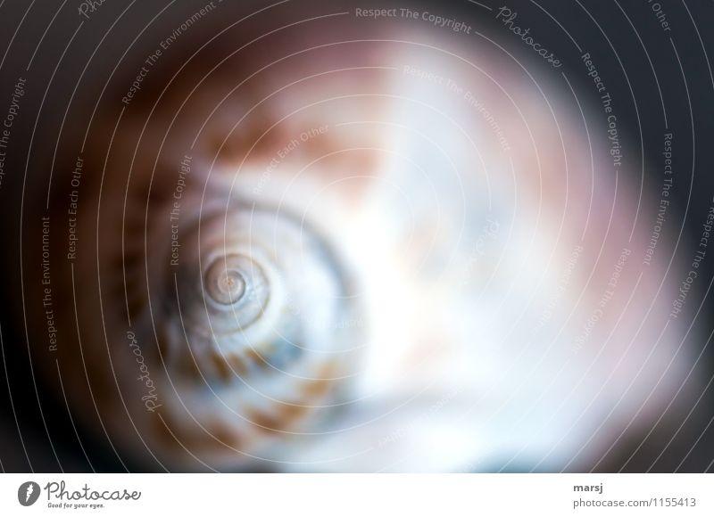 Spirale vom Schneckenhäuschen auf den Punkt gebracht Schneckenhaus Meditation harmonisch hypnotisierend einfach natürlich gedreht drehen minimalistisch