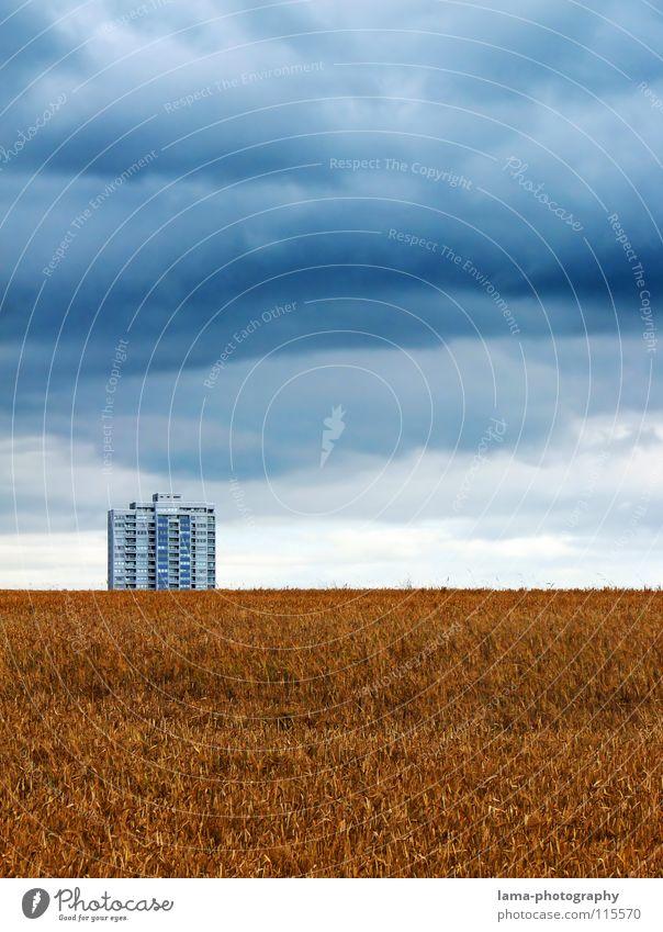 Wolken-Reich Ernte Weizen Ähren Feld Kornfeld Gerste Landwirtschaft Bauernhof Herbst Fußweg Wiese Spurrinne ländlich Unwetter schlechtes Wetter Sturm Donnern