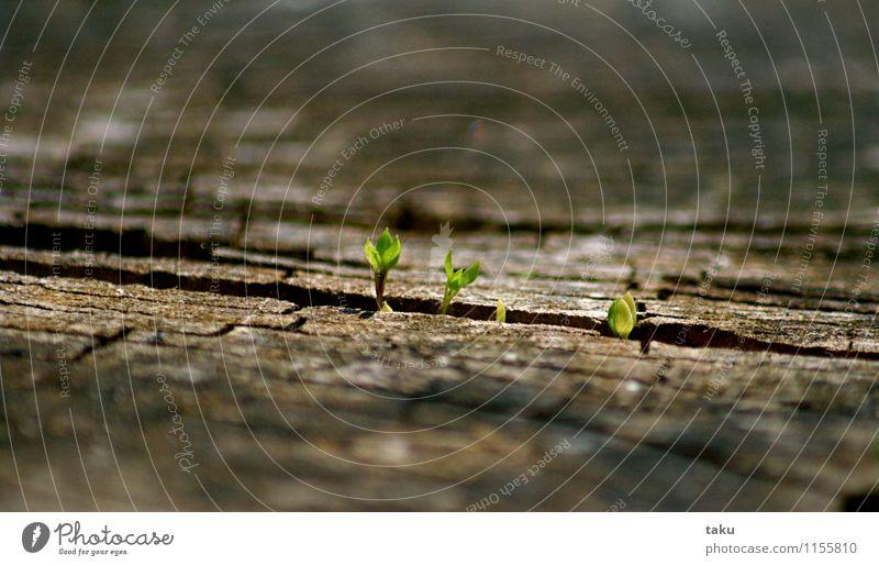 ...PURE LIVING... Natur Landschaft Pflanze Urelemente Frühling Baum Gras Blatt Grünpflanze Wildpflanze Wald authentisch Unendlichkeit natürlich stark braun grün