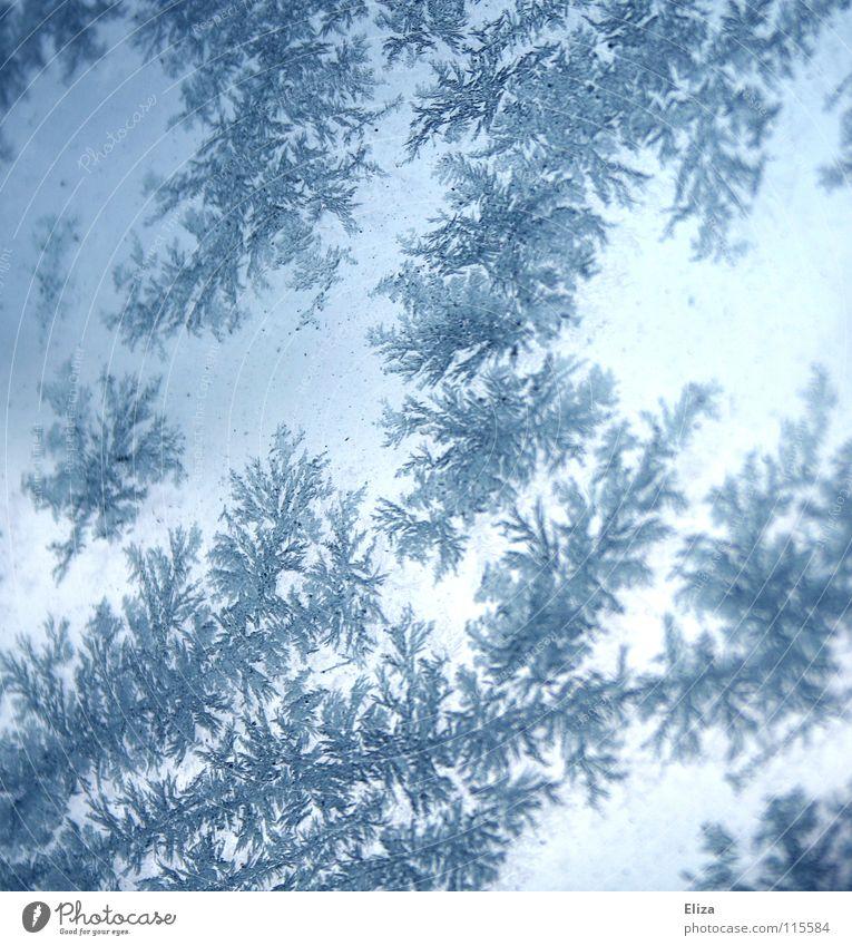 Das Lieblingsmuster der Schneekönigin blau Winter kalt Fenster Eis Beleuchtung glänzend trist Frost Klarheit gefroren Jahreszeiten Fensterscheibe Eiskristall