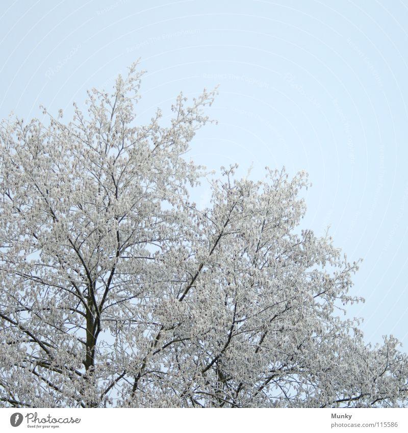 Willkommen, Winter II Himmel weiß Baum blau Winter schwarz kalt Herbst Tod braun Baumstamm Strommast Zweig Baumrinde verzweigt