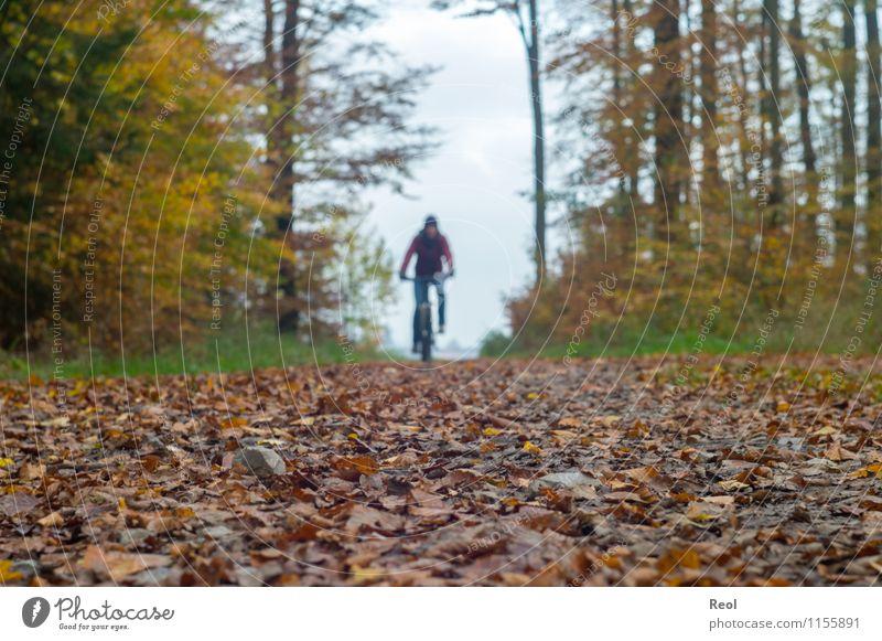 Herbsttour Sport Fahrradfahren Mountainbike Blatt Wald Wege & Pfade Fußweg Fahrradtour braun sportlich Wolken herbstlich Farbfoto Gedeckte Farben Außenaufnahme