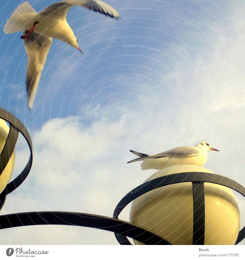Mafied bekommt Besuch Möwe Herbst Lampe Wolken schwarz weiß Schnabel Meer Küste Strand Kommunizieren Vogel Himmel fliegen sitzen blau Ostsee