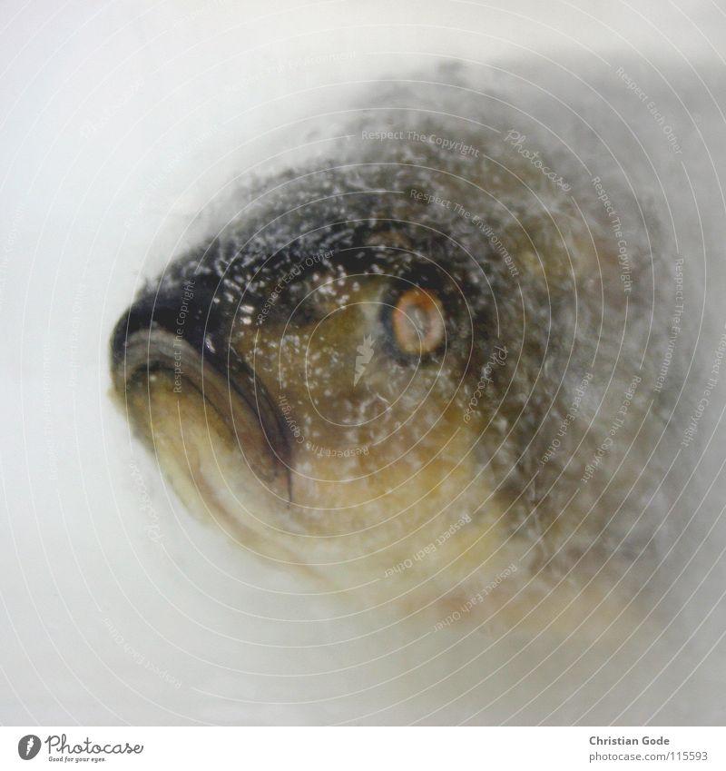 Was koch ich bloß heut? Wasser Winter Auge Leben kalt Ernährung Tod Wärme Traurigkeit Mund Eis Zeit Schwimmen & Baden Fisch Trauer Physik