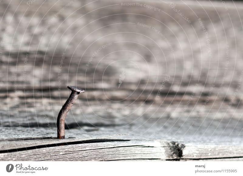 Geknickter, rostiger Nagel. Alleine auf einem alten, rissigen Holzbrett. Metall kaputt Farbfoto Gedeckte Farben braun Strukturen & Formen Vergänglichkeit