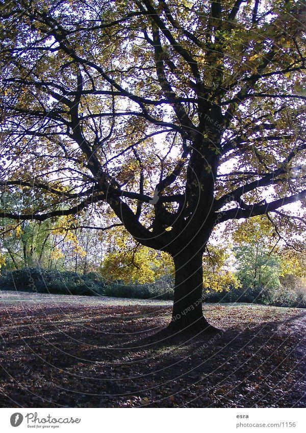 Schattenbaum Natur Baum Blatt Park Landschaft Stimmung