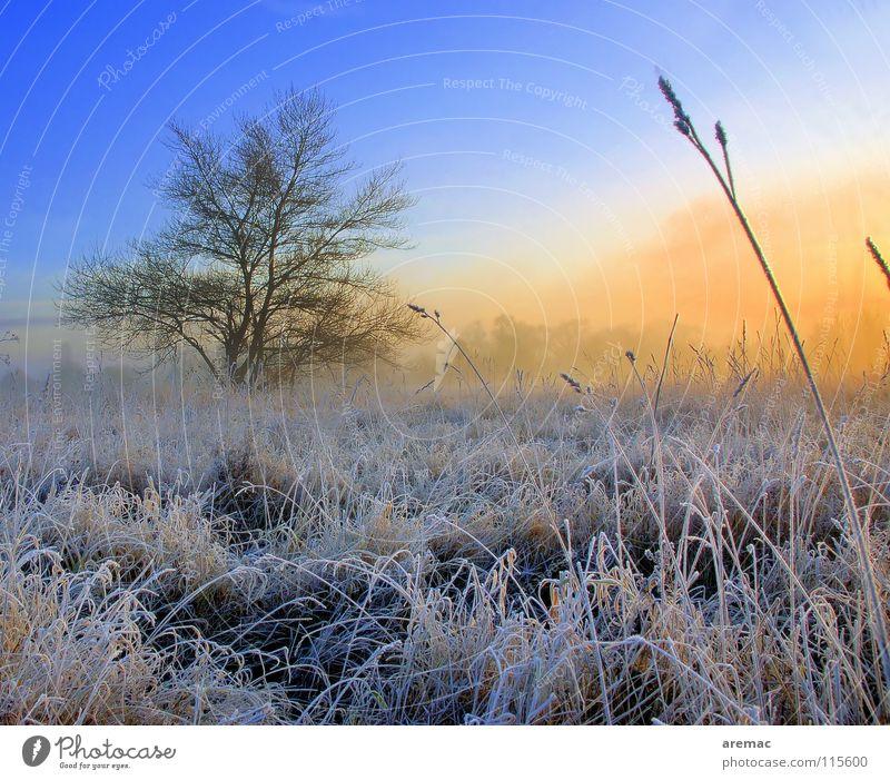 Dauerfrost Baum Feld Wiese Sonnenaufgang Nebel Gras Winter Landschaft Seil