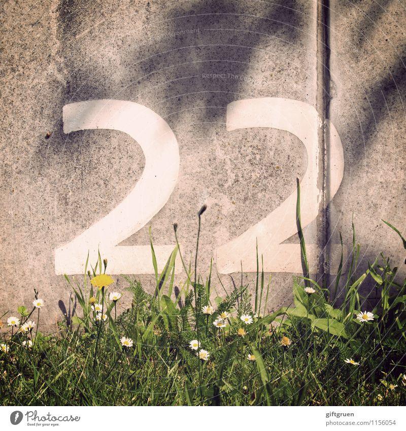 titan Pflanze grün weiß Sommer Blume Blatt 18-30 Jahre Blüte Frühling Gras Mauer grau Ordnung Schilder & Markierungen Geburtstag Schriftzeichen
