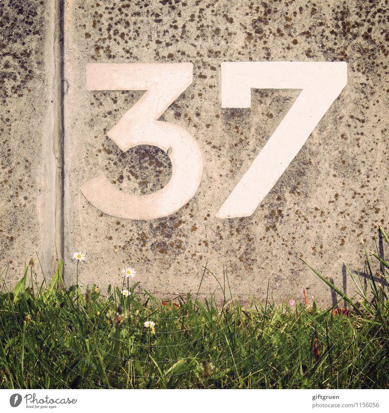 rubidium Blume Wand Wiese Gras Mauer Ordnung Schilder & Markierungen Beton Ziffern & Zahlen schreiben Halm Gänseblümchen Furche Jubiläum Beschriftung