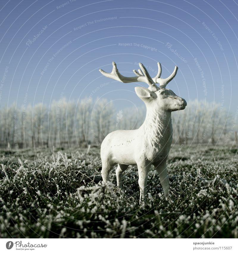 Looking for christmas Natur Weihnachten & Advent weiß Freude Winter kalt Schnee Wiese Gras Frost Statue Wildtier gefroren frieren Hirsche Raureif