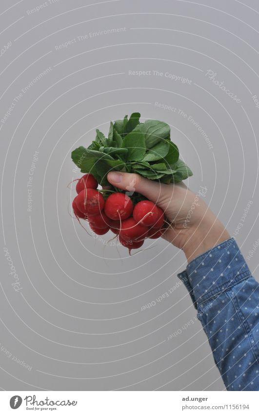 Kein Apfel (6) Lebensmittel Gemüse Salat Salatbeilage Ernährung Umwelt Natur Essen machen nachhaltig DIY selbstgemacht Urban Gardening Stadt Ernte Erntedankfest