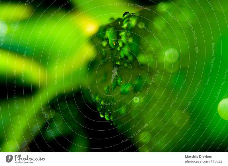 Tropfen Blatt Pflanze Photosynthese Unschärfe hydrophob hängen hängenbleiben nass feucht Sauberkeit zart Zärtlichkeiten schön einfarbig Stengel Baum Erfrischung