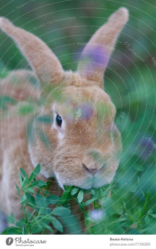 Möhrchen | Hattu keine? Muttu streiken Vegetarische Ernährung Leben Tier Schönes Wetter Tiergesicht Hase & Kaninchen beobachten Fressen ästhetisch Coolness blau