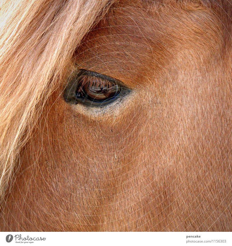 der geruch von freiheit Tier Wärme Gefühle Auge braun wild frei weich Zeichen Neugier Unendlichkeit Pferd Fell Vertrauen Mut Geruch