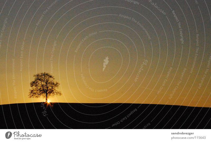 Sonnenuntergang die ganze Nacht ... Herbst Baum schwarz gelb Abenddämmerung Himmel Verlauf Einsamkeit Zeit ruhig Schatten sun black Silhouette Natur sky Ast