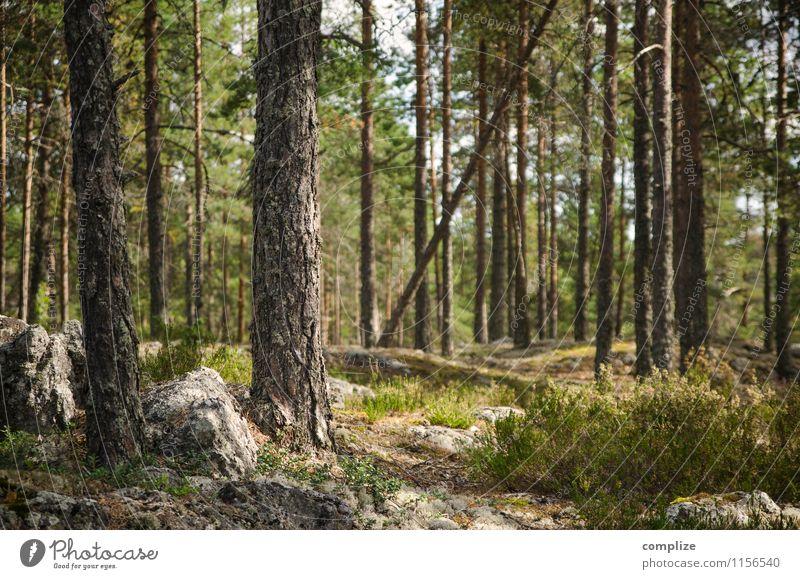Finnischer Wald Ferien & Urlaub & Reisen Ausflug Abenteuer Ferne Freiheit Expedition Sommer Sommerurlaub Umwelt Natur Landschaft Klima Pflanze Baum Sträucher