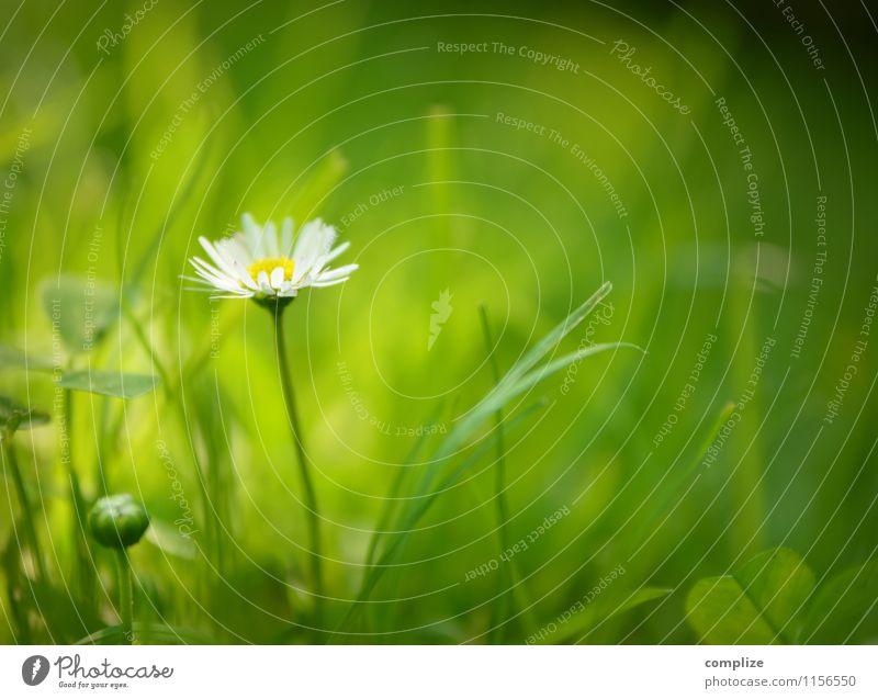 im Frühling Wellness Sinnesorgane Erholung ruhig Spa Sommer Umwelt Natur Pflanze Erde Sonne Blume Gras Sträucher Grünpflanze frisch natürlich grün rein