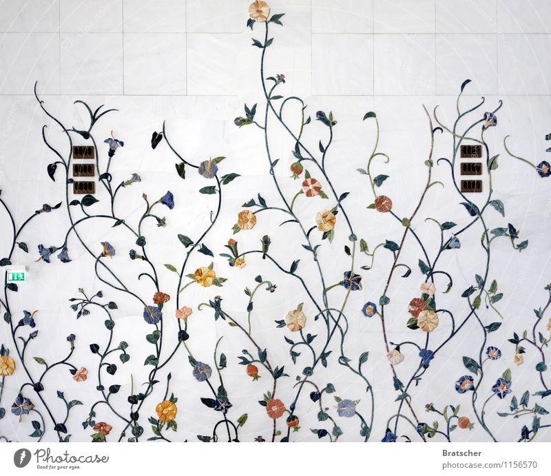 Frühling lässt sein weißes Bad... Pflanze Blume Blatt Blüte Grünpflanze exotisch Architektur Mauer Wand Ornament ästhetisch glänzend Natur Farbfoto
