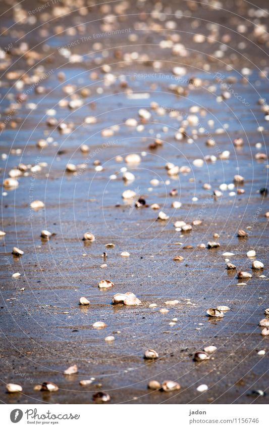 vermuschelt. Meditation Ausflug Strand Meer Umwelt Natur Landschaft Urelemente Küste Bucht Muschel nass Gelassenheit Leichtigkeit Wege & Pfade Ferne Wasser