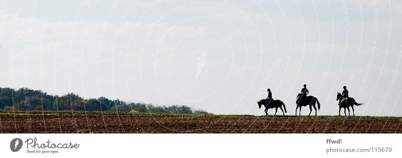 3 PS Feld Silhouette Ausflug Kurzurlaub Ausritt Pferd Reiter Freizeit & Hobby Reitsport Reiten galoppieren laufen unterwegs Ferien & Urlaub & Reisen Natur
