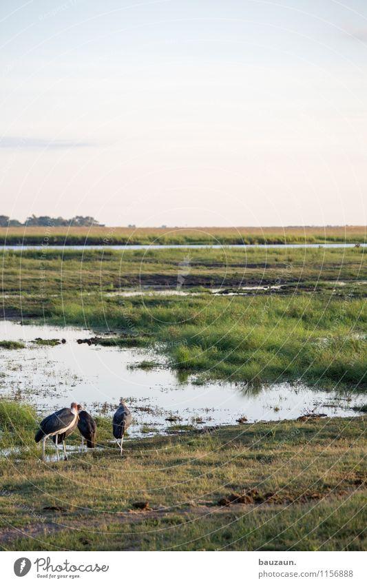 -. Natur Ferien & Urlaub & Reisen Sommer Wasser Landschaft Tier Ferne Umwelt Wärme Gras Küste Freiheit Vogel Erde Tourismus Wildtier