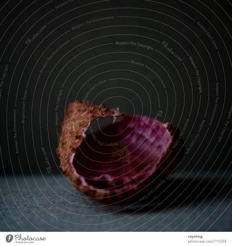 litschi - leer Lychee Vergänglichkeit braun schwarz violett Vitamin Ernährung vergangen Trauer Verzweiflung Frucht Schalen & Schüsseln Lebensmittel Ende