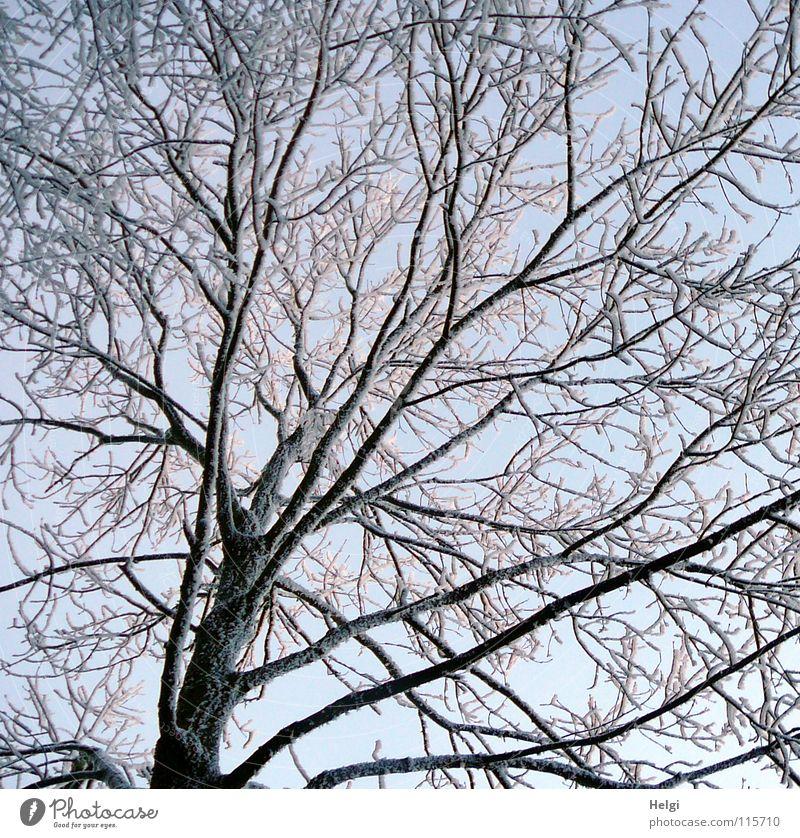 winterlich... Winter frieren gefroren Raureif Baum Geäst lang dünn klein groß verzweigt Wintertag kalt Dezember Licht weiß braun schwarz Frost Schnee Eis