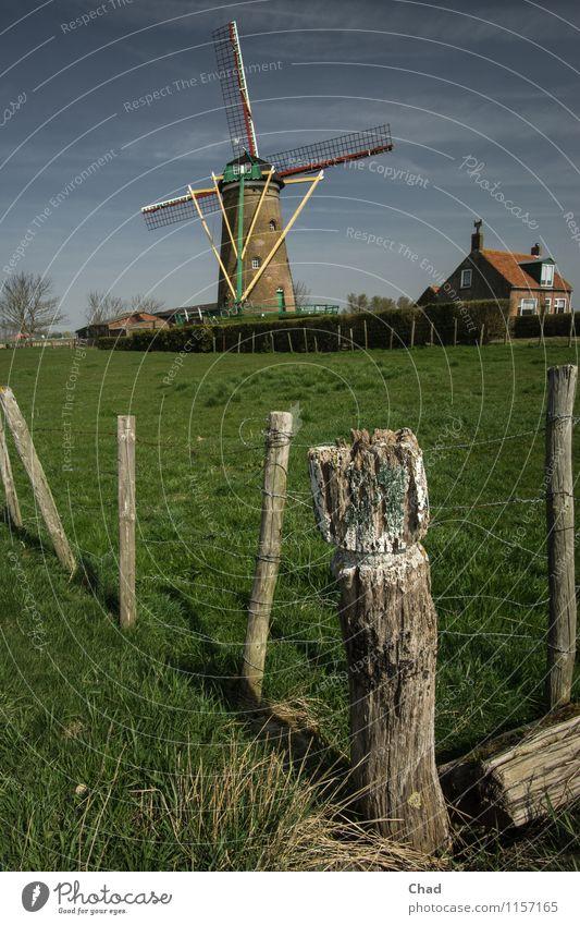 Langlebig | Holland Klischee Natur Ferien & Urlaub & Reisen alt blau grün Erholung rot ruhig Haus Frühling Wiese Gras Gebäude Holz Zufriedenheit frisch