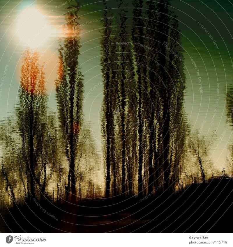 Fatamorgana Natur Wasser Baum Sonne Winter kalt See nass Oberfläche Verzerrung Färbung