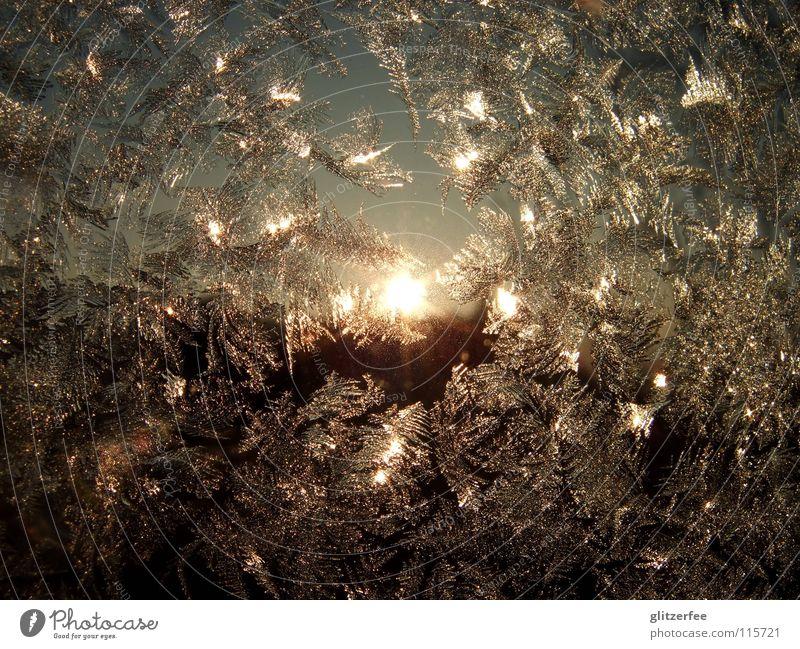 sonneneisblumen Himmel blau Sonne Winter kalt Fenster Schnee Eis glänzend gold Frost frieren silber Fensterscheibe Kristallstrukturen November
