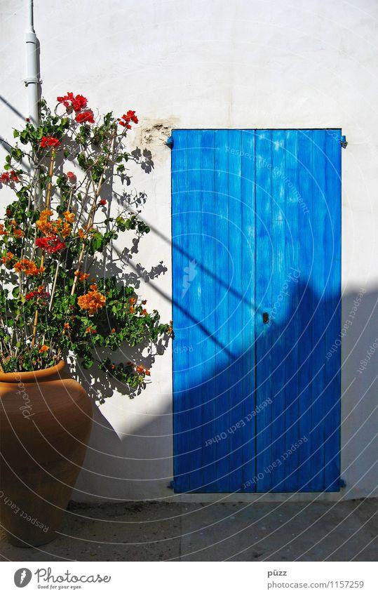 Die blaue Tür Ferien & Urlaub & Reisen blau Pflanze Sommer weiß Sonne Blume Haus Wand Holz Mauer Stein Fassade Häusliches Leben Tourismus Tür