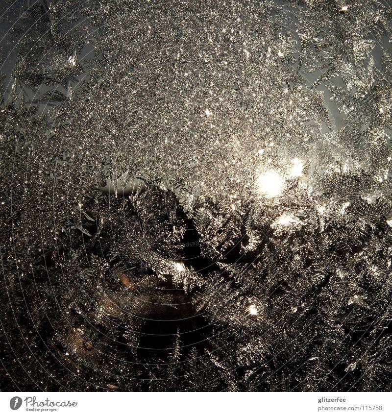 glanz und gloria blau Wasser Sonne ruhig Winter kalt Fenster Schnee grau Eis glänzend frieren Mond Fensterscheibe November Eisblumen