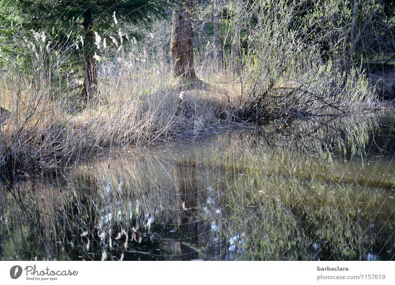 Lieblingsplatz Natur Landschaft Urelemente Wasser Schönes Wetter Baum Gras Sträucher Schilfrohr Seeufer Teich leuchten hell Stimmung Lebensfreude Erholung