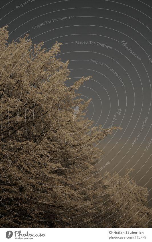 Der Winter Baum weiß grau Sträucher Wald Winterwald kalt Eis Minusgrade Schnee blau Himmel Frost Raureif