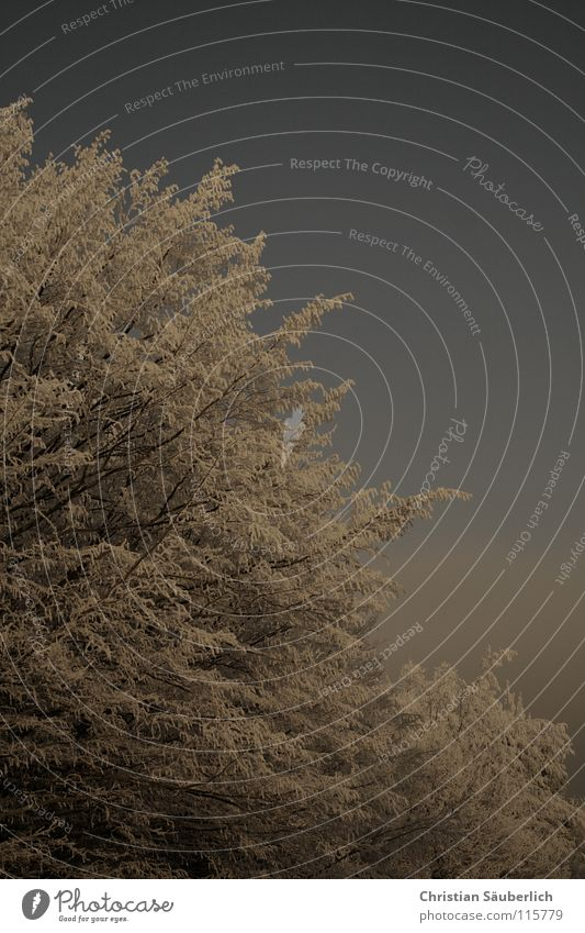 Der Winter Himmel blau weiß Baum Wald kalt Schnee grau Eis Sträucher Frost Raureif Winterwald Minusgrade