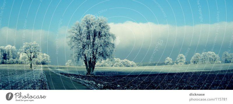 ...like snow! schön Himmel Baum blau Winter Wolken Straße Schnee Wege & Pfade Landschaft Feld Ausflug Romantik Idylle Jahreszeiten Raureif