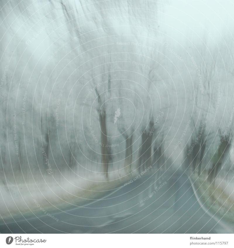 winterfahrt deluxe weiß Baum Freude Winter dunkel Straße kalt Schnee Gras Freiheit hell Eis Deutschland Angst fliegen groß