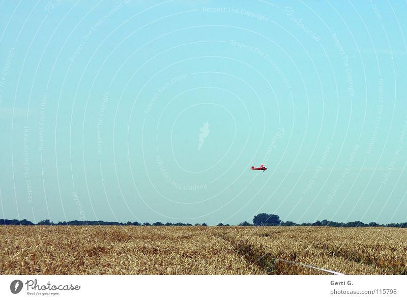 Überflieger Modellflugzeug Kornfeld Spielen Fluggerät Weizen Weizenfeld himmelblau fliegen Flugzeug Freizeit & Hobby Himmel Überflug Blauer Himmel