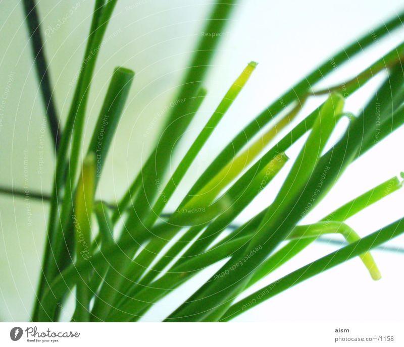 4green grün Ernährung Küche Dinge Gemüse Schnittlauch