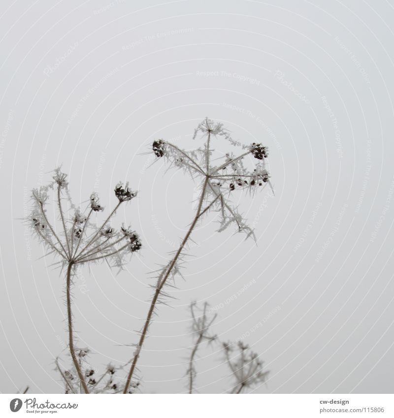 komische rute mit eispinkeln zu weihhnachten Natur schön Himmel weiß Pflanze Winter Wolken Einsamkeit kalt Schnee Blüte grau Landschaft Luft Eis lustig