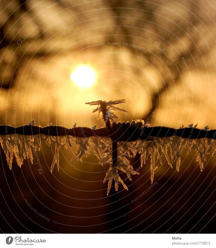 Klirrende Kälte Sonne Baum Winter kalt Schnee Beleuchtung Luft Eis frei Schönes Wetter frisch Frost Ast Zweig atmen obskur