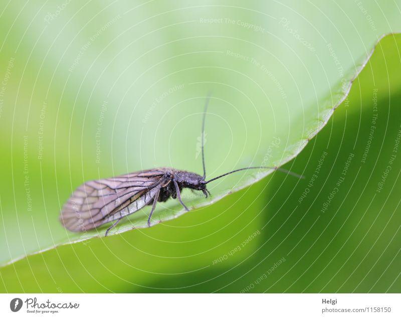 auf der Suche... Umwelt Natur Pflanze Tier Wassertropfen Frühling Blatt Grünpflanze Park Florfliege 1 krabbeln ästhetisch einzigartig klein nass natürlich braun