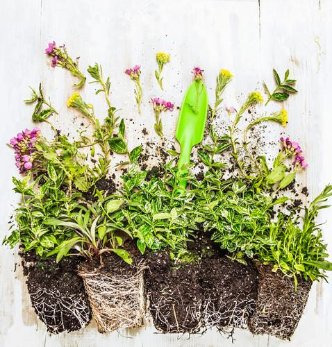 Bodendecker Pflanzen auf dem Gartentisch Natur schön Sommer Blume Blatt Leben Frühling Herbst Stil Hintergrundbild Freizeit & Hobby Design