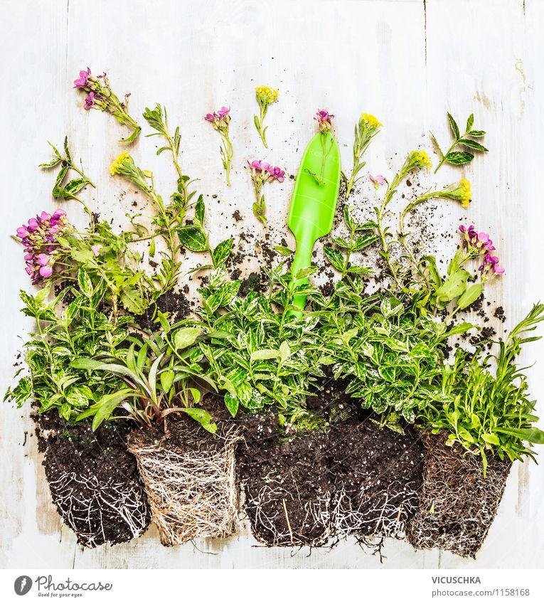 Bodendecker Pflanzen auf dem Gartentisch Stil Design schön Leben Freizeit & Hobby Natur Frühling Sommer Herbst Blatt Grünpflanze Hintergrundbild Top Schaufel