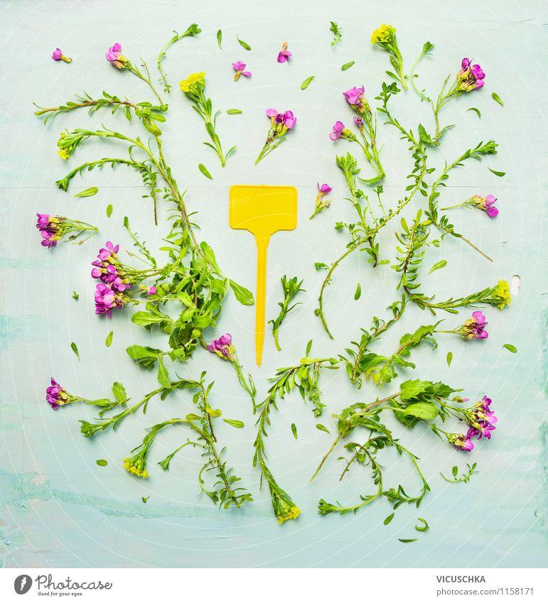 Gelber Pflanzenschild und Gartenblümchen Natur grün Sommer Blume gelb Stil Hintergrundbild rosa Design Schilder & Markierungen Zeichen Schrebergarten schreien