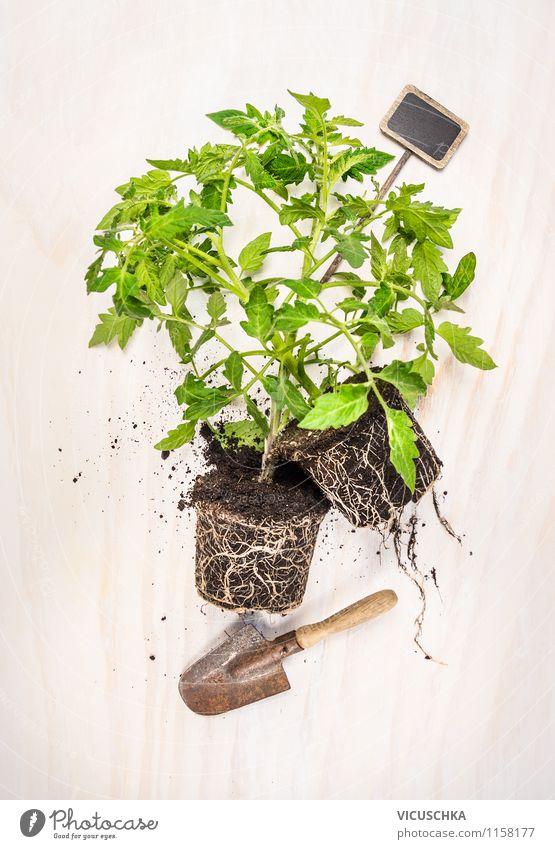 Tomatenpflanzen fürs Garten Natur Pflanze Sommer Leben Stil Design Erde Schilder & Markierungen Gemüse Bioprodukte Biologische Landwirtschaft Gartenarbeit